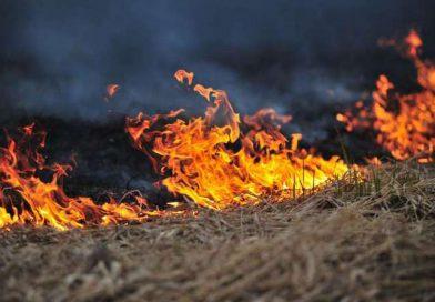 Požar trave i niskog raslinja